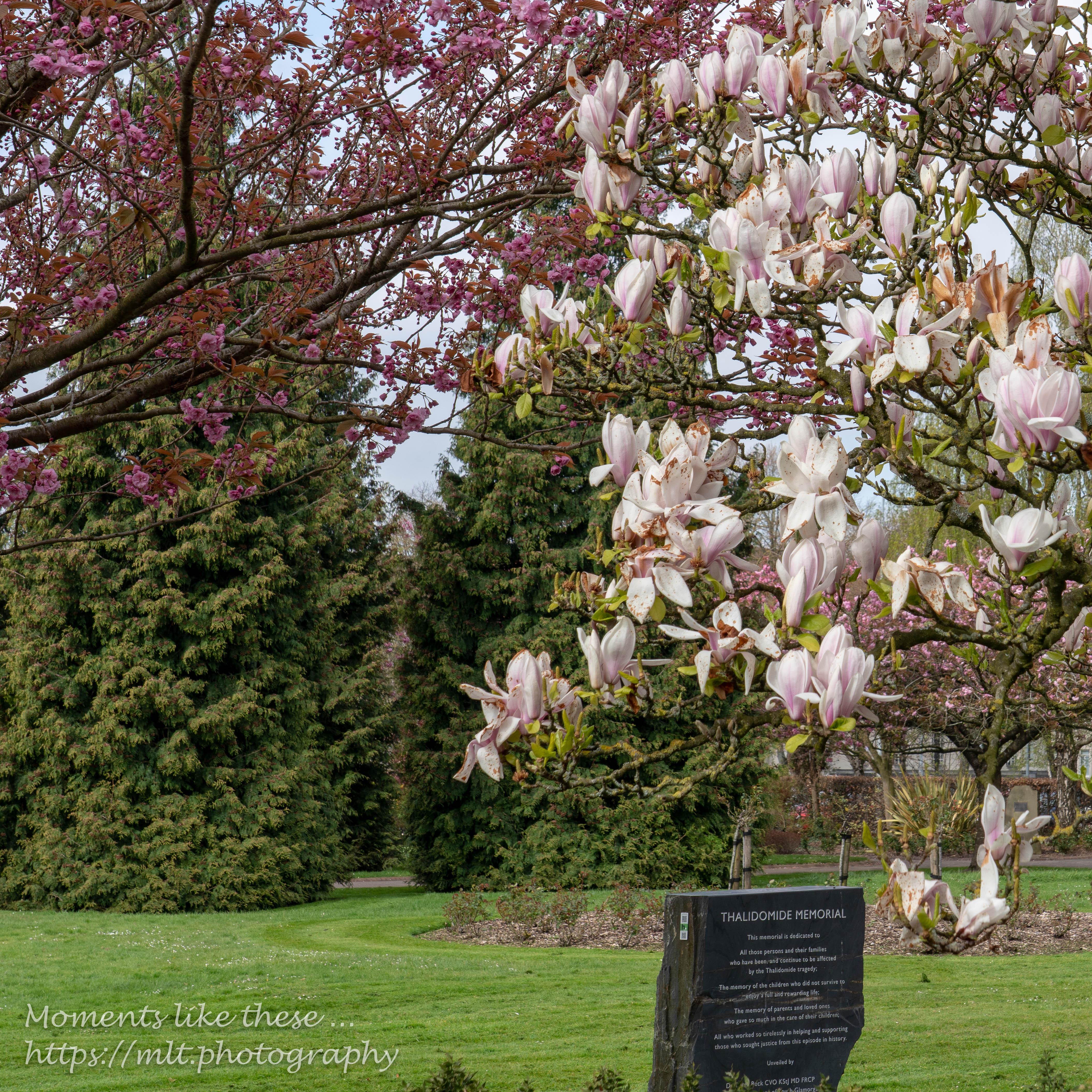 Thalidomide Memorial