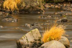 Afon Elan at Elan Village