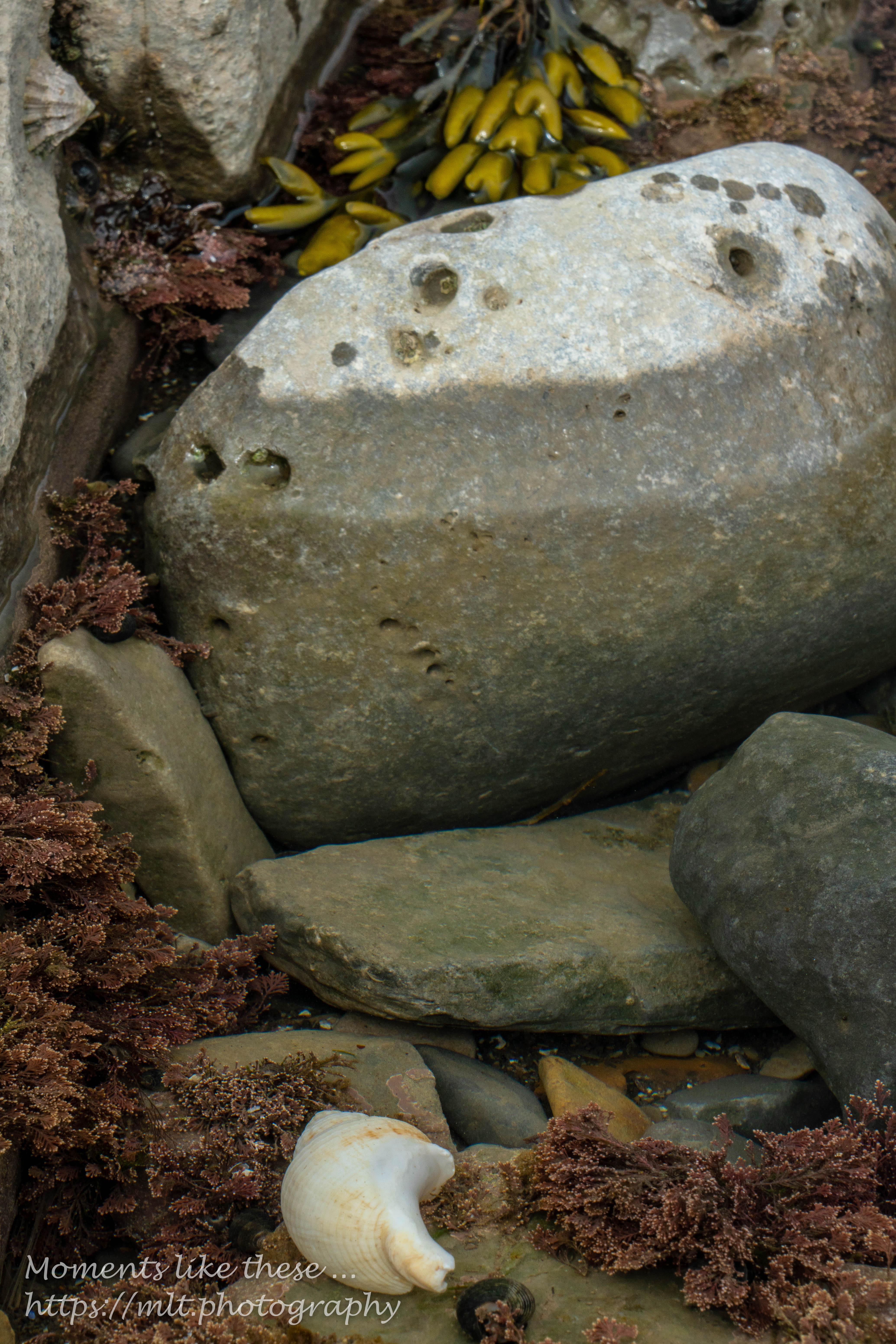Rock pool textures
