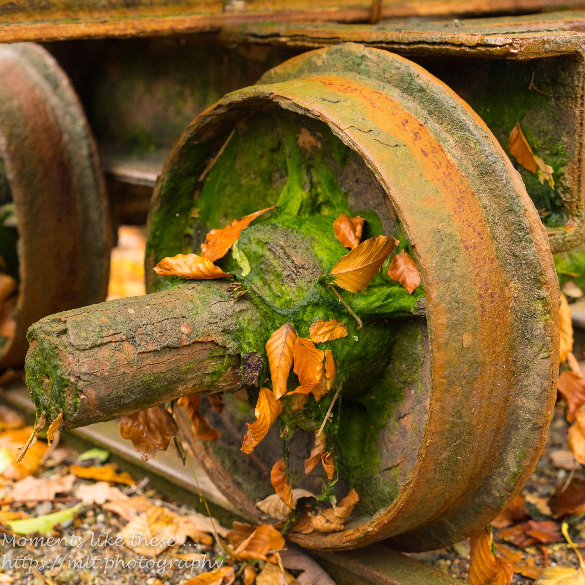 Wheel study in autumn
