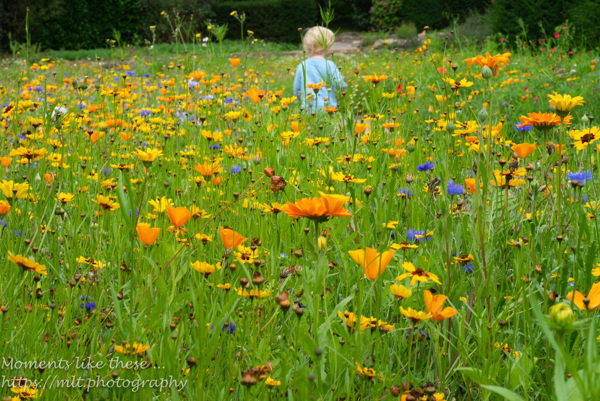 In the meadow - Dyffryn Gardens