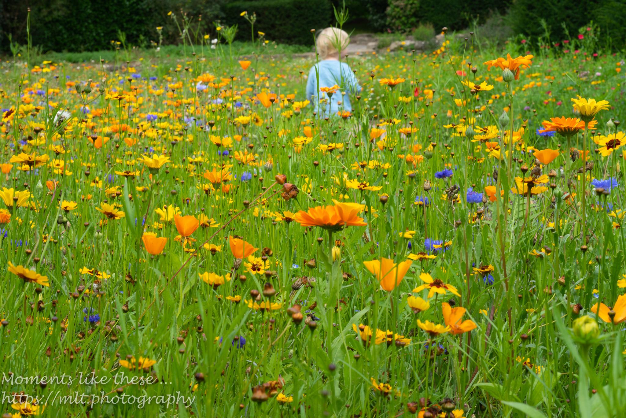 In the meadow - Dyffryn Gardens