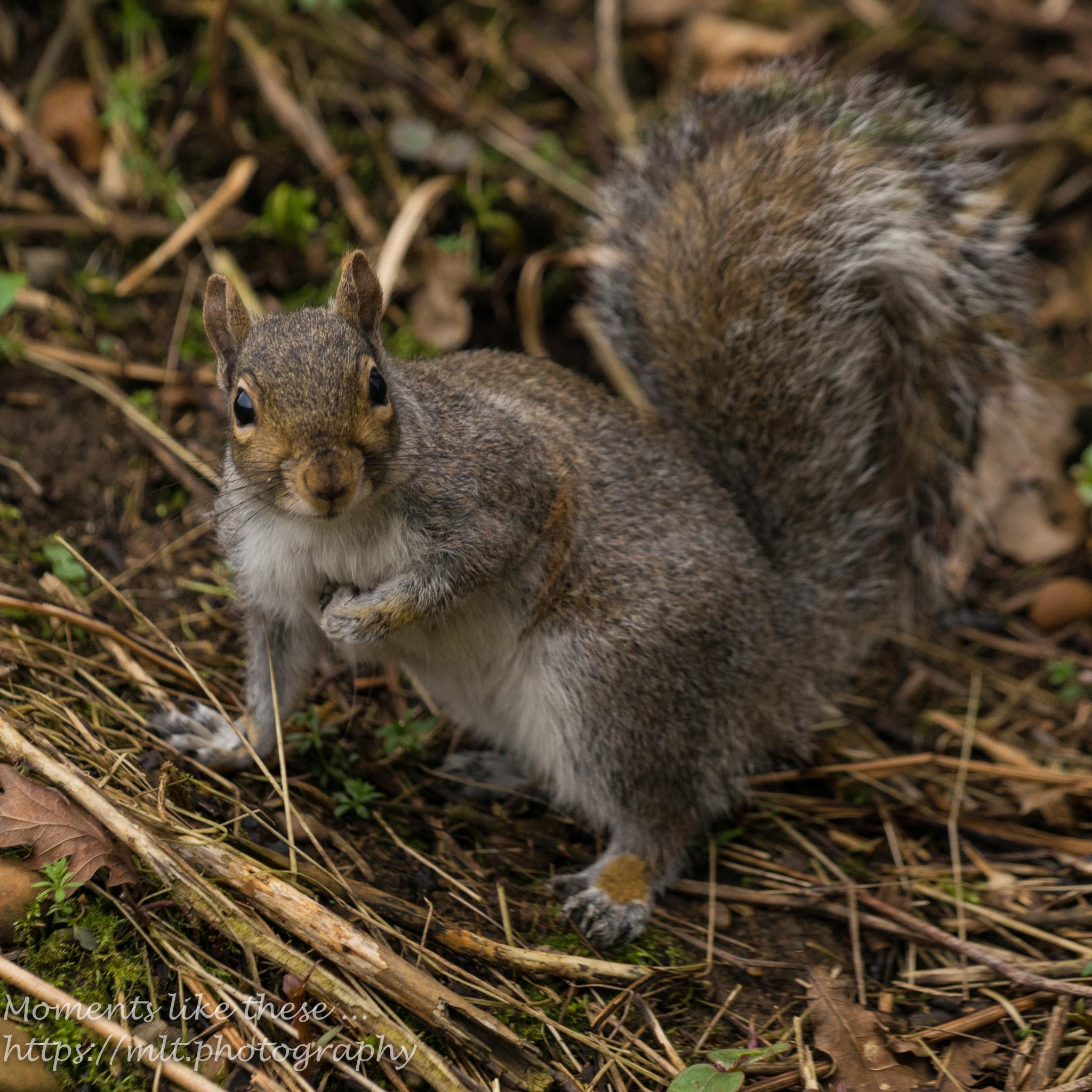 Squirrel surprise