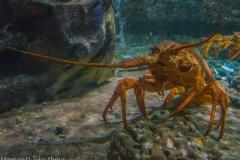 Crabby capture