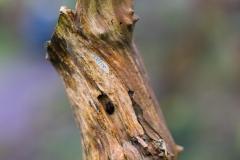 Woody texture