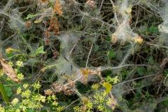 Webs of caterpillars